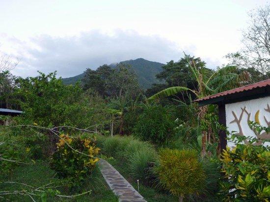 Finca Mystica:                   View of Volcan Maderas