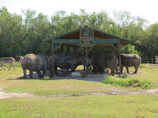 West Palm Beach Lion Country Safari Koa Rhino S Gathering For Lunch