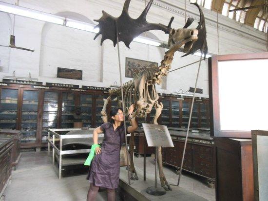 Indian Museum (Jadu Ghar):                   D' original Rudolph d Reindeer