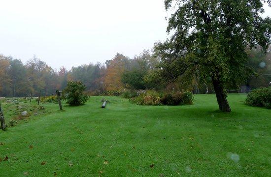 Shearer Hill Farm B&B:                   Pasture