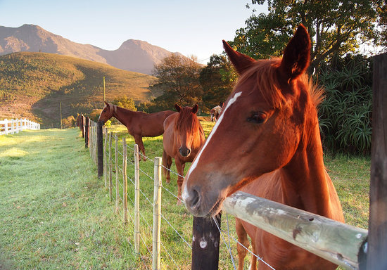 Eight Bells Mountain Inn : Horses in paddock