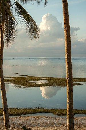 Anda White Beach Resort:                   Beach area