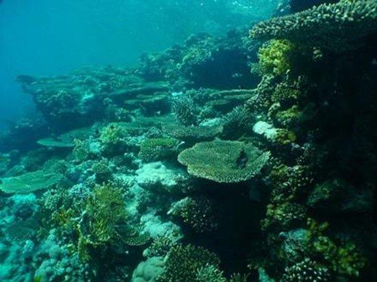 Reef Teach Bild