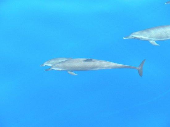 Melia Sinai:                   delfini
