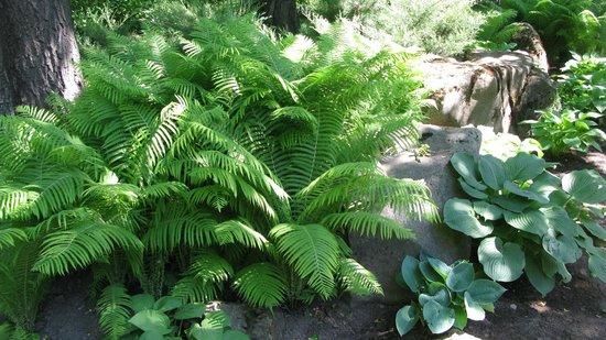 Central Botanical Garden