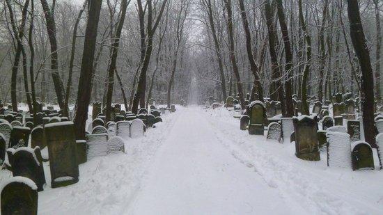 Jewish Cemetery (Cmentarz Zydowski):                   Février 2013 - 5773