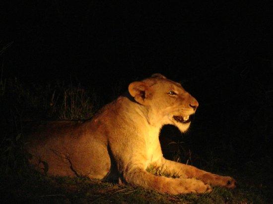 Kapama River Lodge :                                     Safári noturno