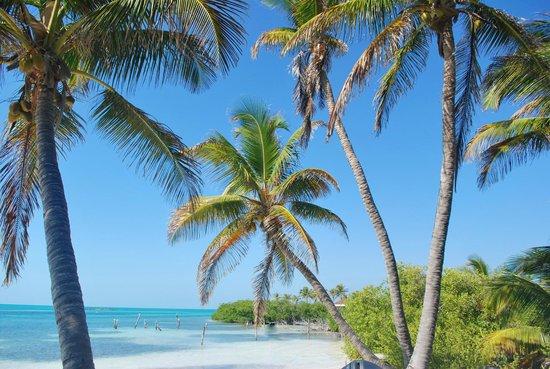 Isla Contoy:                   paradise