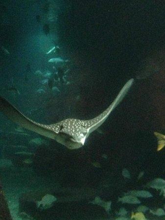 Hotel Riu Palace Paradise Island:                   Atlantis Aquarium