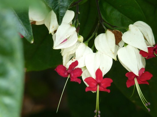 Pura Vida Gardens and Waterfalls:                   Delicate