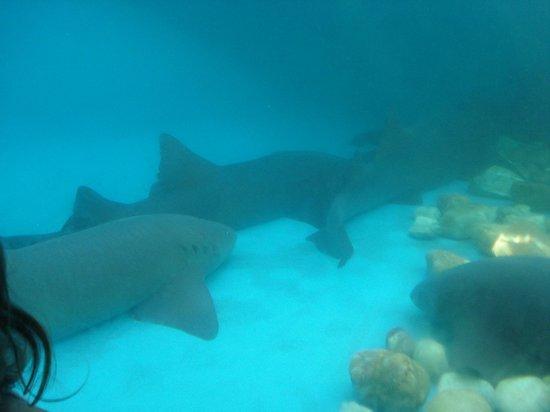 Hotel Eco Atlântico:                   Os tubarões são uma atração inesquecível