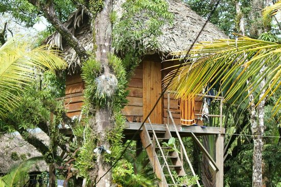 Casa De La Iguana :                   the treehouse