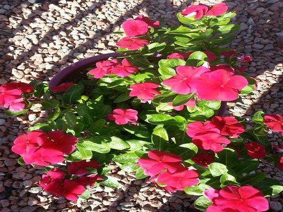 Travelodge Phoenix Downtown: Garden Flower