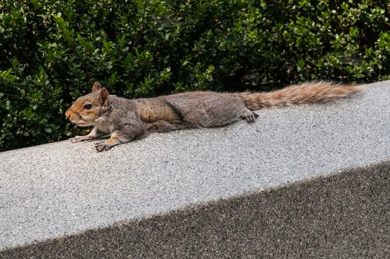 National Mall :                   Federal Worker Squirrel