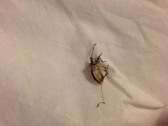 Aloft Arundel Mills:                   bugs on my bed-I killed this one