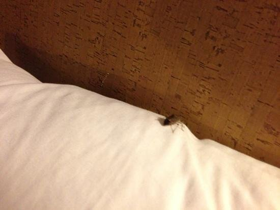 Aloft Arundel Mills:                   bug on pillow