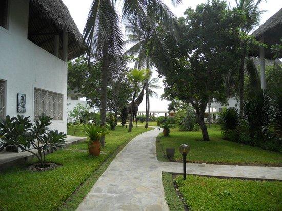 Kola Beach Resort:                   giardino