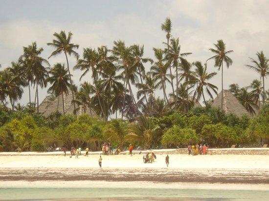 Neptune Pwani Beach Resort & Spa:                   visto dal mare