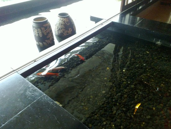 Guesthouse International Hotel:                   The water level was quite low for these koi carp