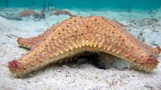 Bocas Water Sports:                                     Starfish