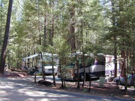 Pinewood Cove RV Park and Campground Foto