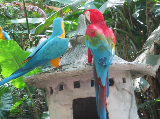 Info Bali Driver - Day Tours: nice variant birds on safari park