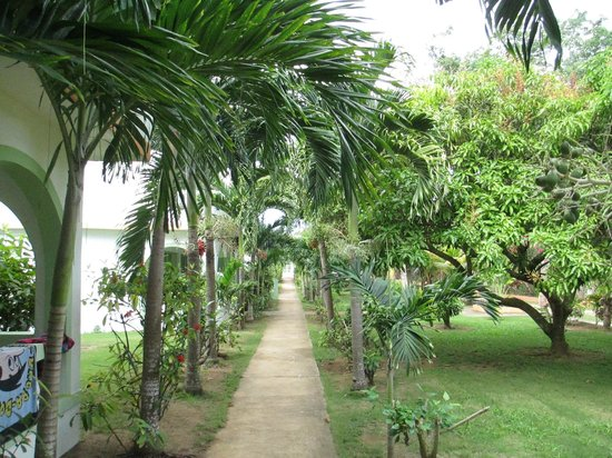 Hidden Paradise Resort Hotel :                   Pathway thru Hidden Paradise to beach