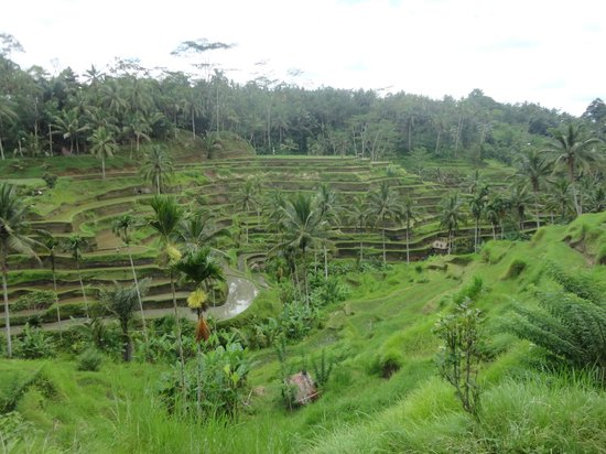 Bali Season Tour - Day Tour