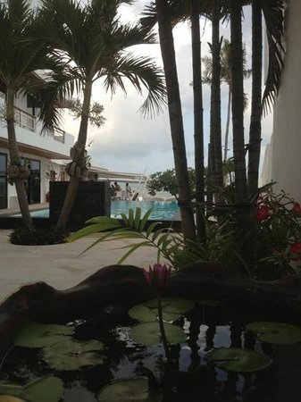 Beluga Boutique Hotel:                   from the entrance looking across the pool