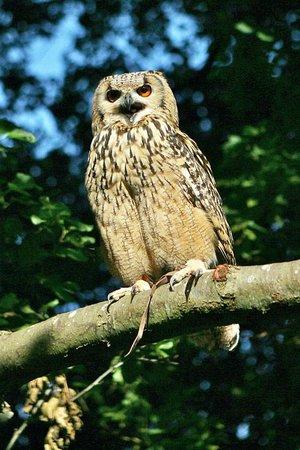 Exmoor Owl & Hawk Centre