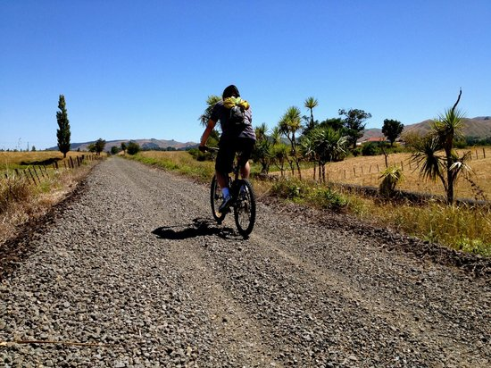 Hauraki Rail Trail - Day Rides:                   on the trail