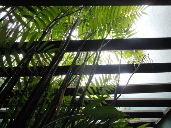Xandari Resort & Spa:                   Ferns outside the room / maybe 12 feet tall