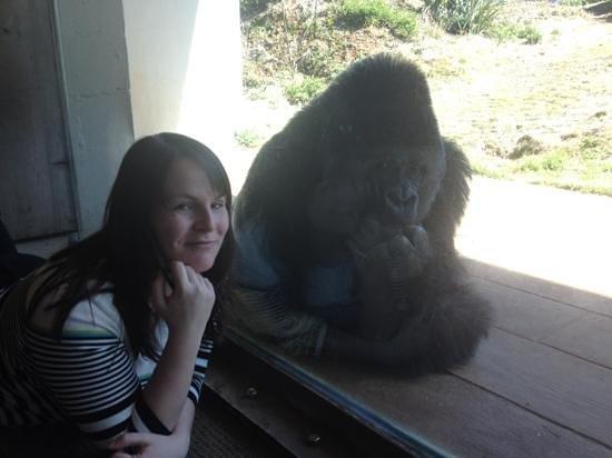 Riverbanks Zoo and Botanical Garden:                   gorilla