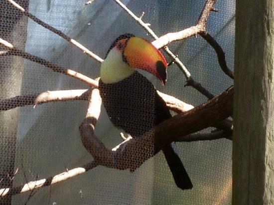 Riverbanks Zoo and Botanical Garden:                   toucan