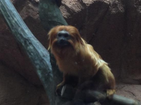 Riverbanks Zoo and Botanical Garden:                   monkey