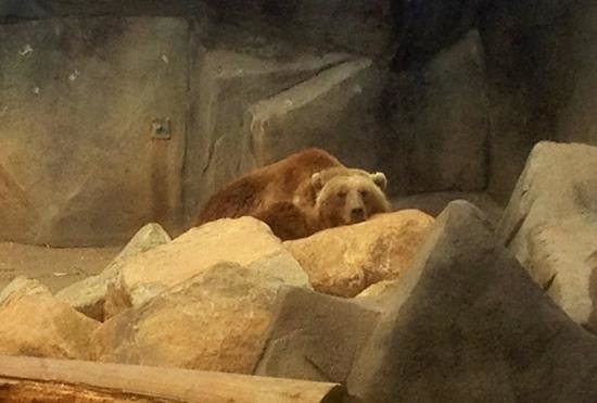 Riverbanks Zoo and Botanical Garden:                   bear