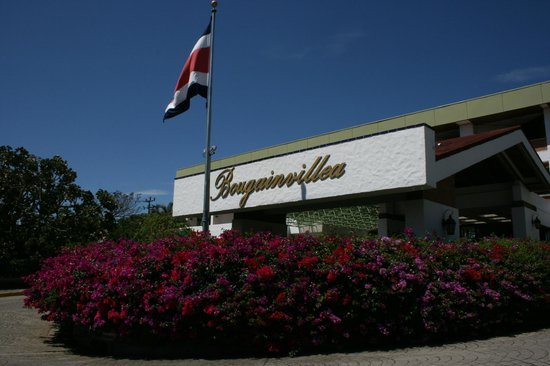 Hotel Bougainvillea:                   Here you are at the hotel