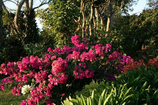 Hotel Bougainvillea:                   in the garden