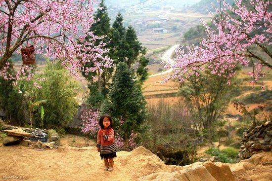 Hanoi A1 Hotel: Spring coming