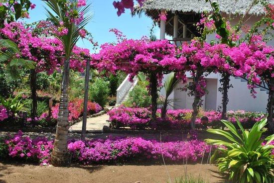 Jacaranda Beach Resort:                   l'esterno delle camere