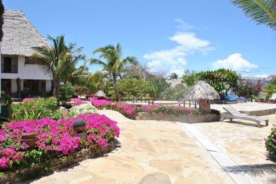 Jacaranda Beach Resort:                   evviva la primavera