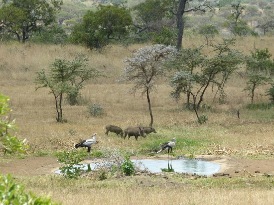 Campi ya Kanzi:                   The water in front of the room (wild animals at water)