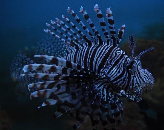 ... - Picture of Mactan Island Aquarium, Mactan Island - TripAdvisor