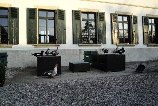 La Ferme du Vert :                                     La cour de l'hôtel