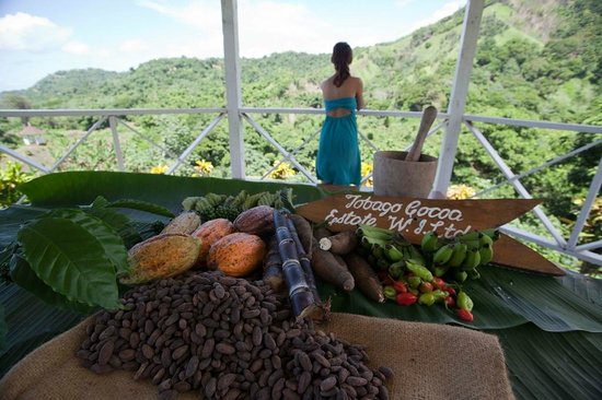 Tobago Cocoa Estate W.I. Ltd: Majestic Views overlooking the Atlantic Ocean