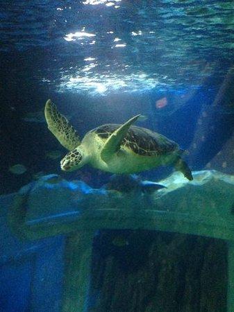 SEA LIFE Porto :                                     turtle