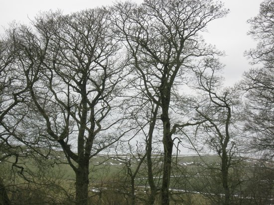 Cotesfield Farm :                   Beautiful View from Bedroom