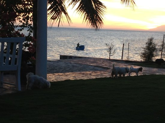 Grace Boutique Resort:                                     Three puppies and a local fisherman