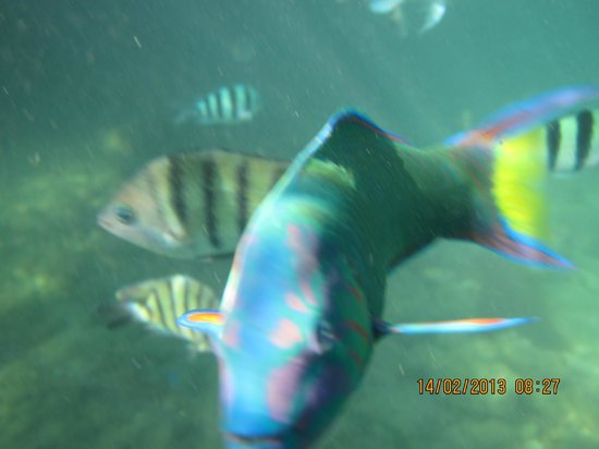 Gayana Eco Resort:                   Diving Centre
