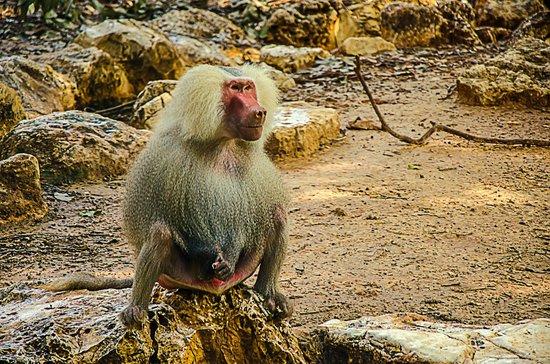 """Safari Park:                   """"I R Baboon"""""""